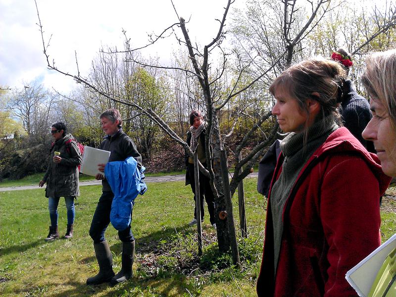 Studenter på ekskursjon til Domkirkeodden. Museet deltar også i bevaring av gamle sorter av eple, plomme og kirsebær og har over 200 trær av gammelt opphav plantet naturlig inn i landskap og tun. Foto: Ingeborg Sørheim.