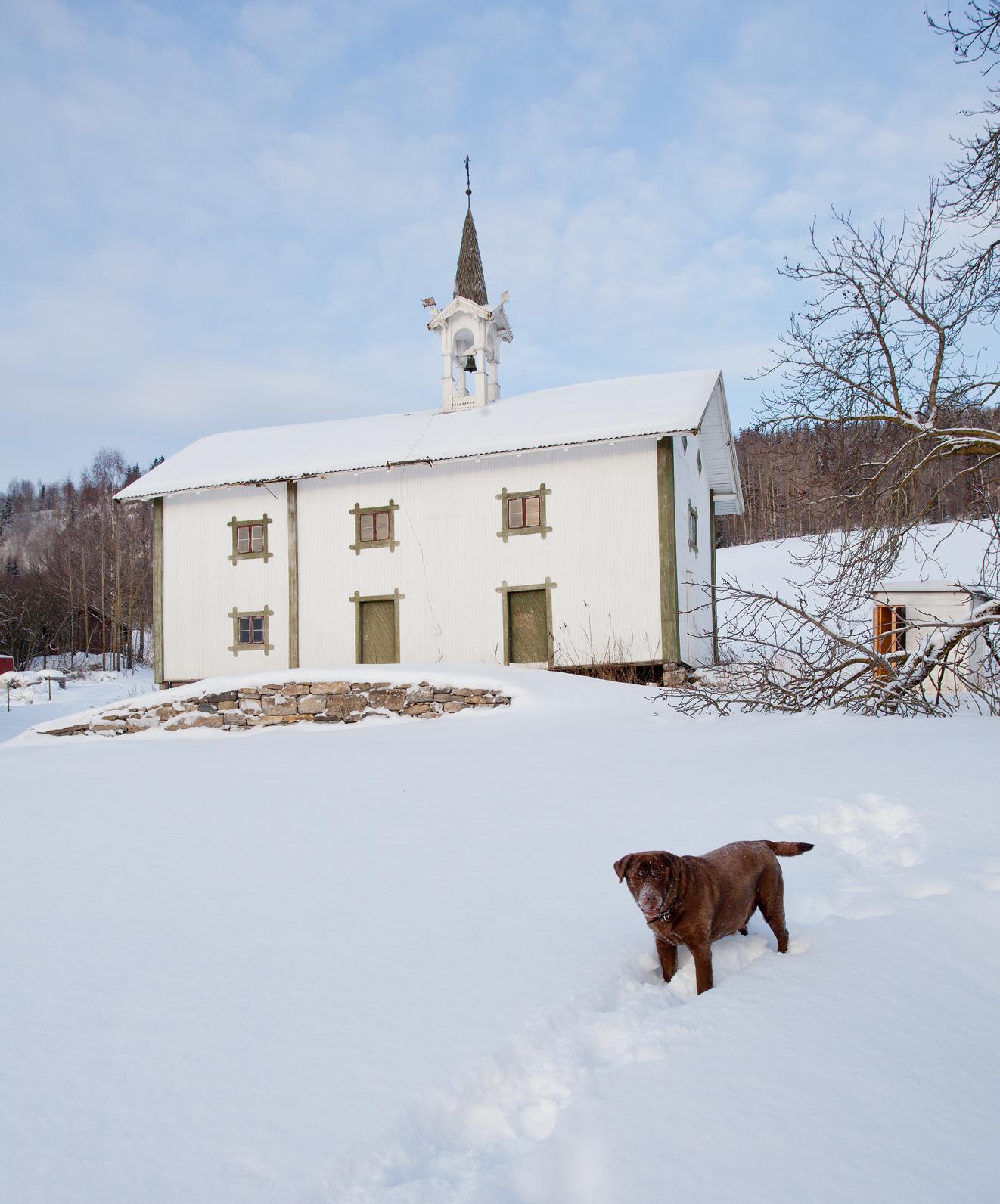 Labradoren Bessy foran stabburet.